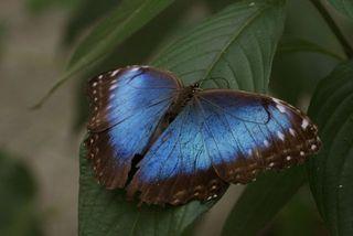 Day 3 Butterfly farm 7
