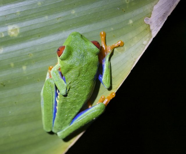 Day 3 Tree Frog2