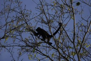 Day 5 Spider Monkey