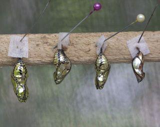 Day 3 Butterfly farm 6