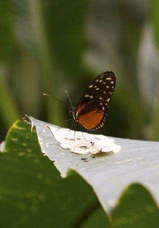 Day 3 Butterfly farm 9