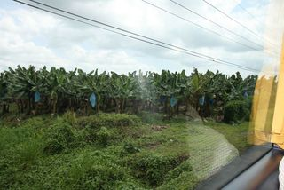 Day 3 Banana Plantation
