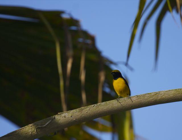 Day 6 Bird