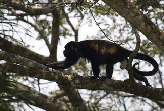 Day 6 Monkeys 7