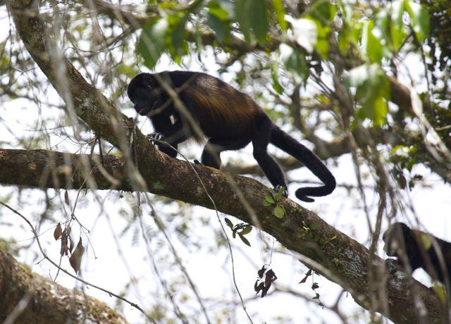 Day 6 Monkeys 3