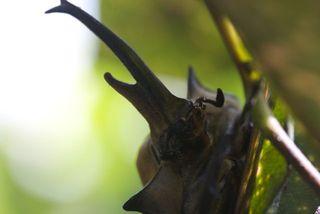 Day 5 Beetle Closeup