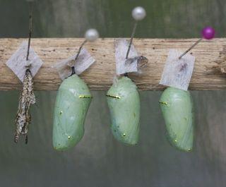 Day 3 Butterfly farm 5