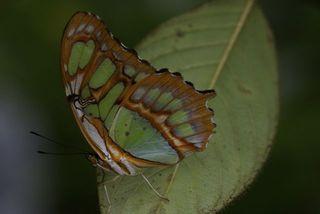 Day 3 Butterfly farm 8