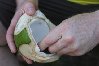 Day 3 Coconut