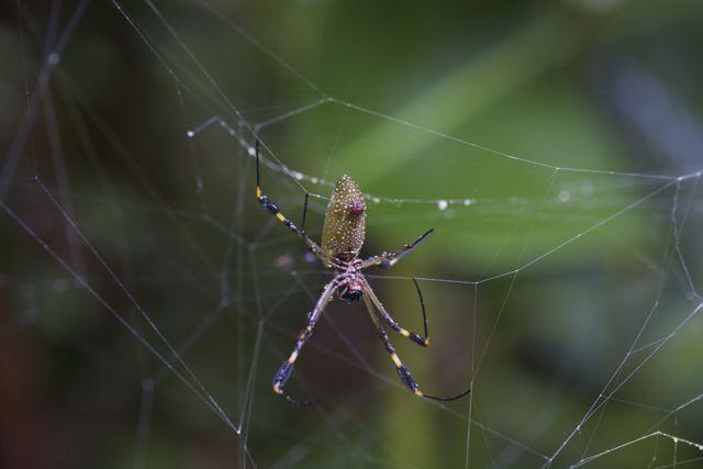 Day 5 Spider