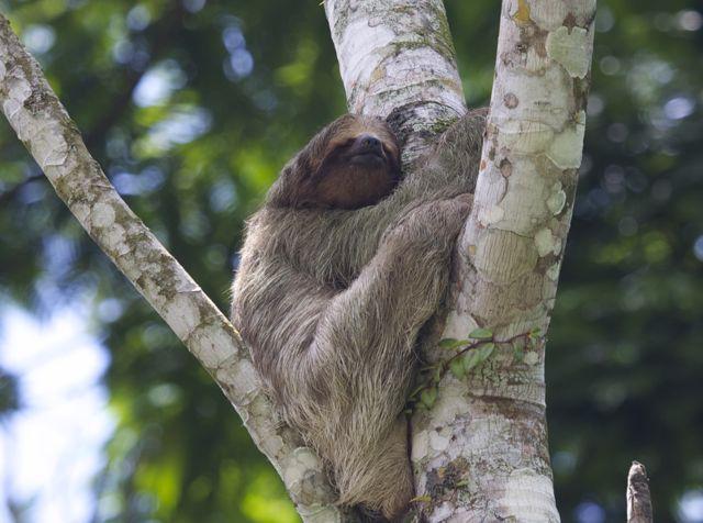 Day 6 Sloth