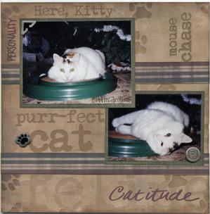 Purrfect_cat